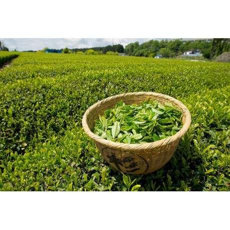 Зеленый и белый чай урожая 2018