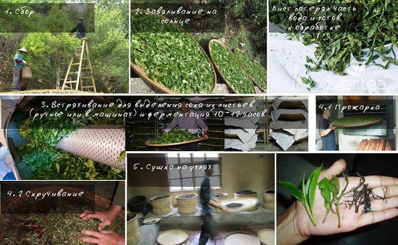 Как делают улуны чаочжоу ча