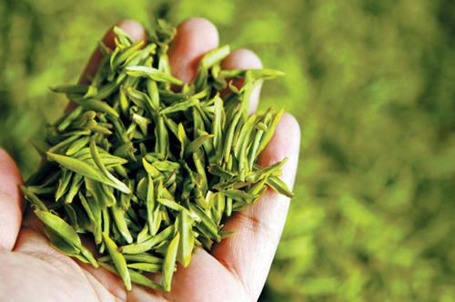 сезоны сбора чая