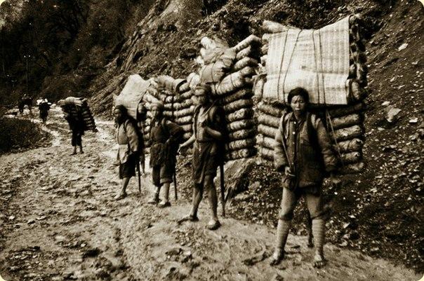 древний чайный путь и носильщики пуэра