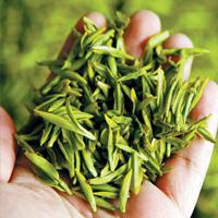 Когда собирают лучший чай: сезонный гид