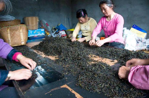 Производство да хун пао: сортировка