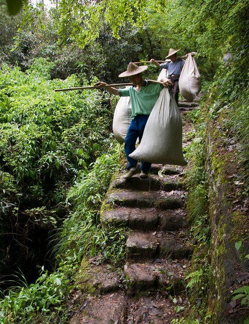 традиционно произведенный чай: ручной сбор