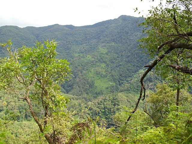 С противоположной горы вы можете увидеть чайные сады Гуа Фэн Чжай. С места съемки до садов не менее четырех часов пешком по джунглям. Вы можете заметить небольшие хижины, используемые для обработки свежих листьев и отдыха.